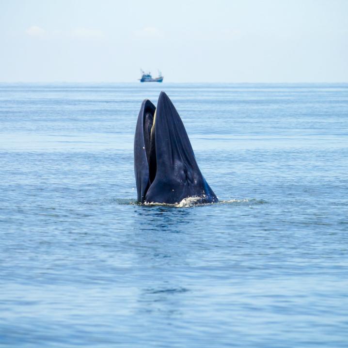 bangkok-whalewatching11
