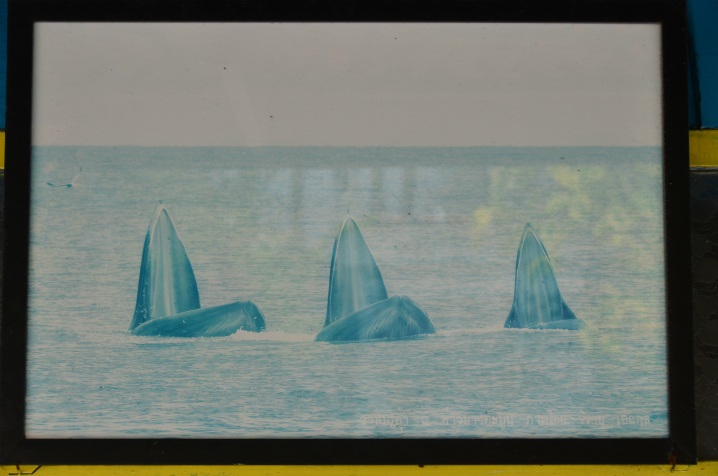 bangkok-whalewatching2