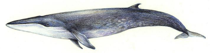 bangkok-whalewatching5
