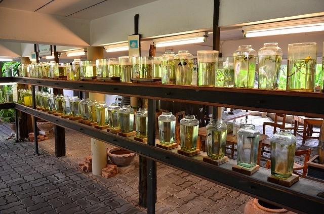 闘魚博物館
