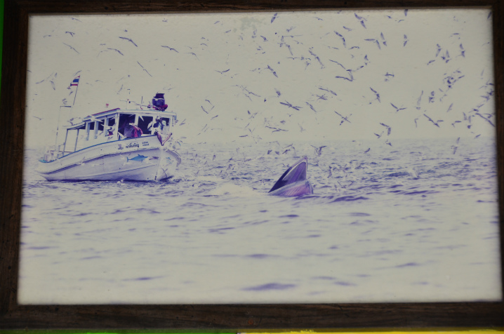 bangkok-whalewatching3